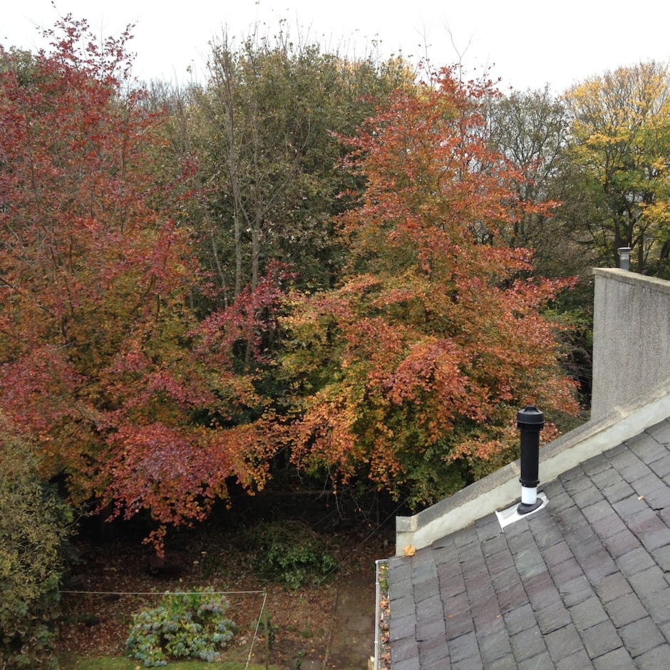 The view from our bedroom. I love the autumn colours.