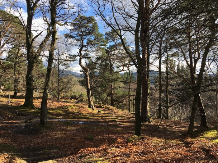 Gardens and woodland walks at Crathes Castle