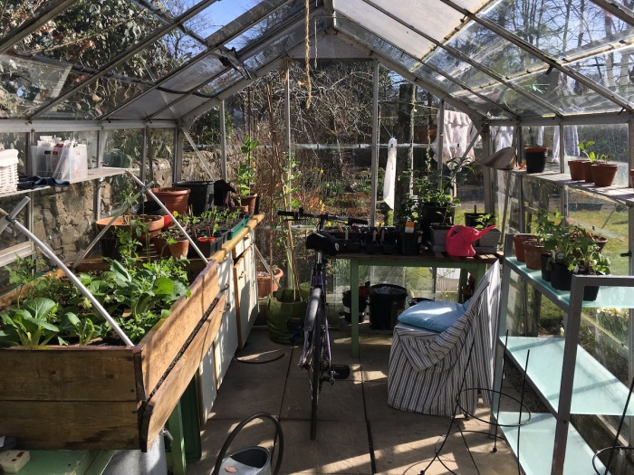 Inside my greenhouse
