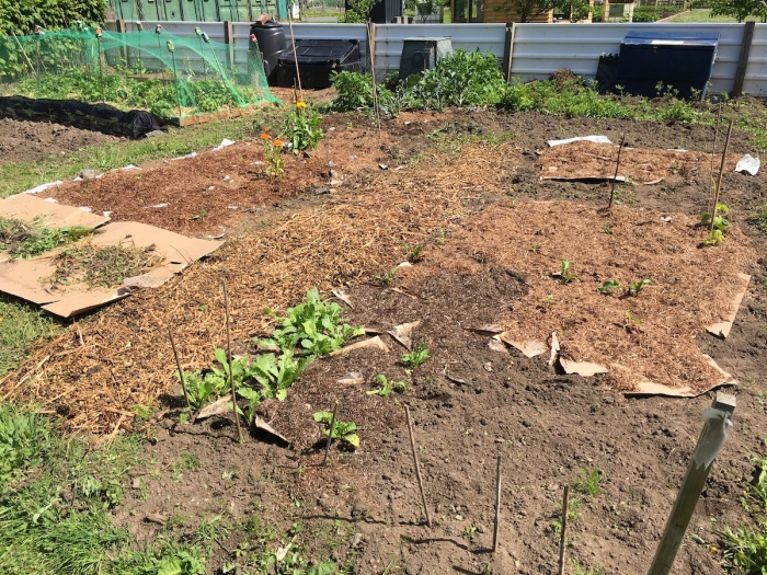 Our allotment two monthslater